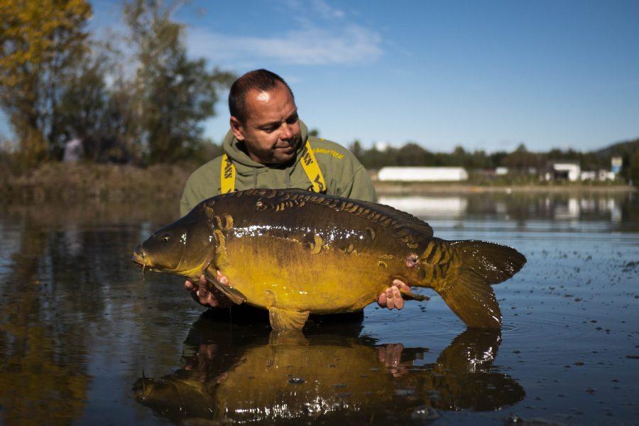 Großer Fisch - Mario Mild